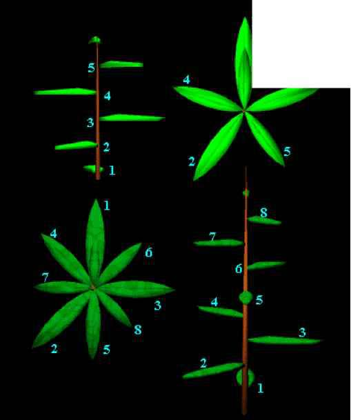 Fibonacci Sequence Plants